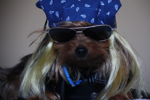 Bret Michaels Dog..
