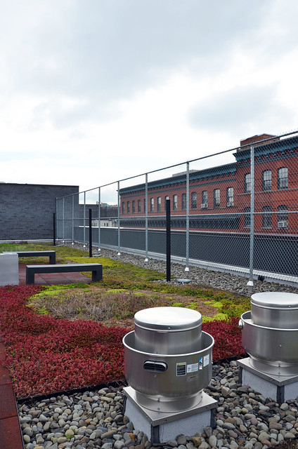 A colorful mix of sedum species grows on the roof of a recently-built, low-income housing unit in the South Bronx. Photo by Tara Thayer.