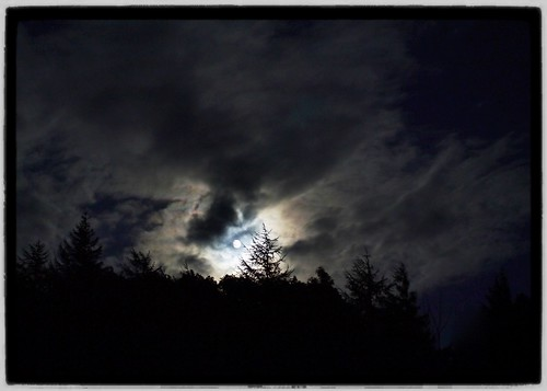 wales woodland nightsky ceredigion