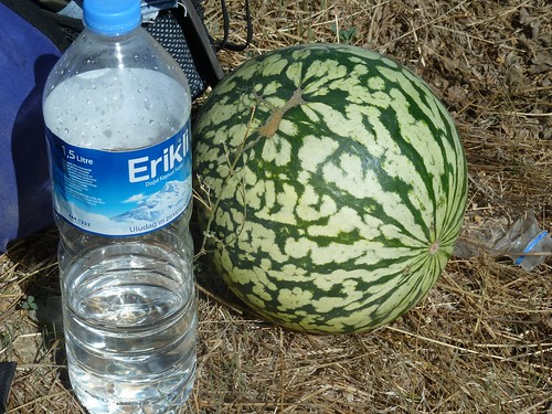 Seriously, take this melon by mattkrause1969