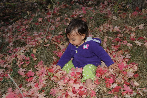 Jovie sitting in the red leaves 9