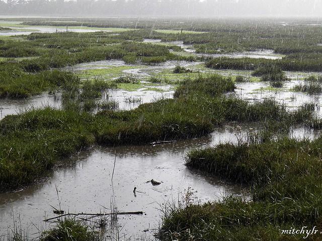 Wetland Rains 1