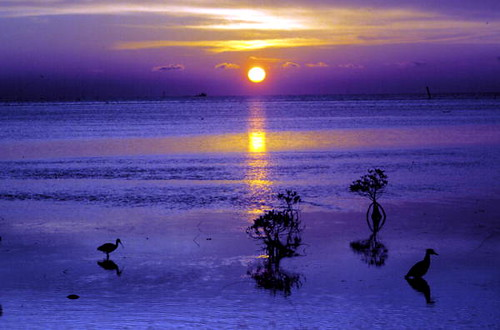 Sunrise on the flats: Key West, Florida
