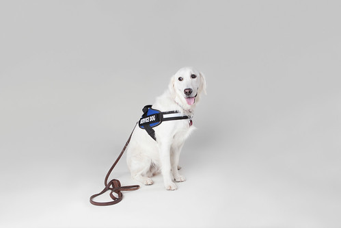 I Need A Service Dog But Can T Afford It