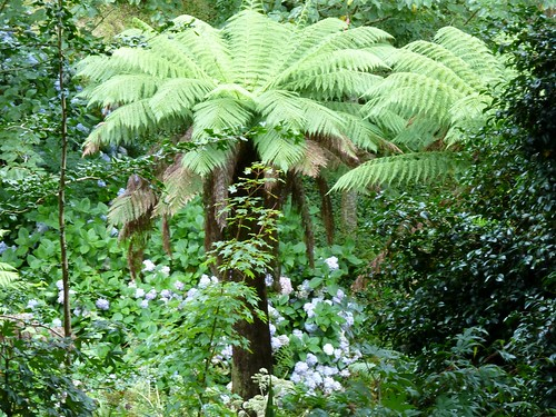 Heligan Garden, Cornwall