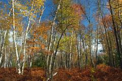 Marion Brooks Natural Area (4)