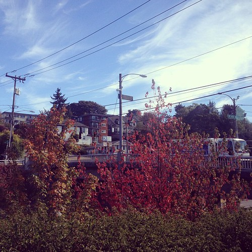 Autumn in Seattle #fromthebuswindow