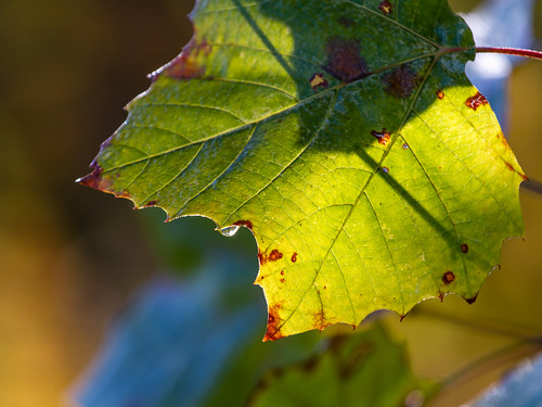 Leaf and water drop by matneym
