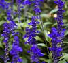 Botanic Gardnes-061