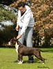 Donnerhall August 2012 with his handler Agustin Farias