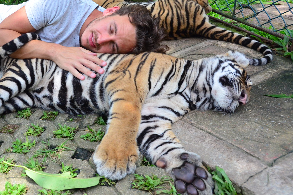 Robert with Tigers
