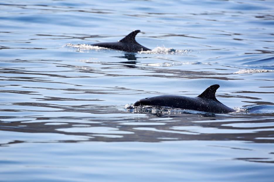 081812_05_dolphin2_01
