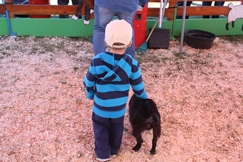 Our Visit to the Orono Fall Fair