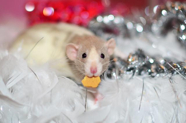 Mini caught stealing a treat!