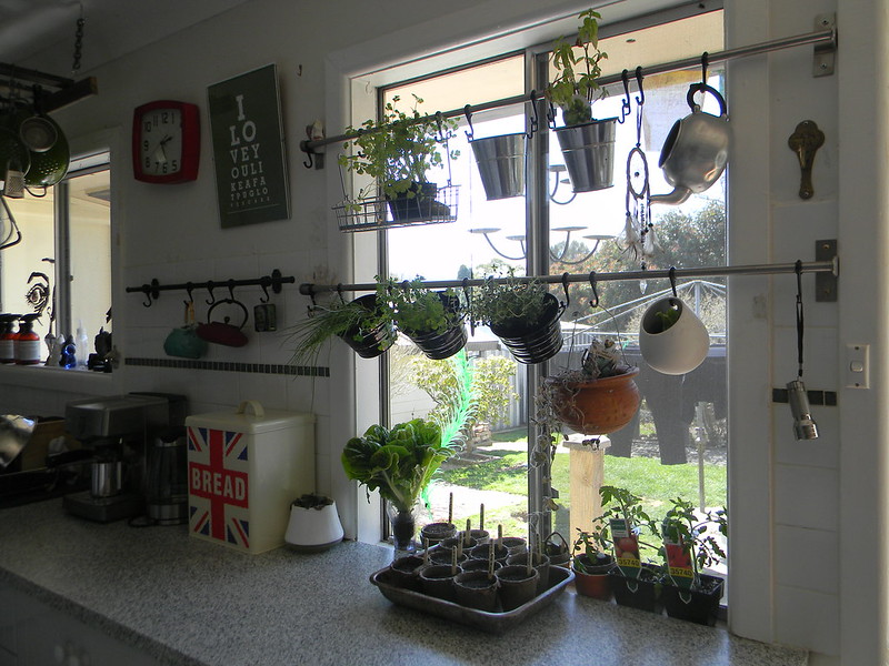 Hang your herb garden in front of your window Offbeat Home Life