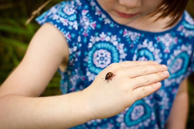 Ladybug14 (1 of 1)