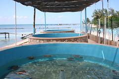 swimming pool(0.0), leisure(0.0), jacuzzi(0.0), estate(0.0), resort(0.0), water park(0.0), lagoon(1.0), resort town(1.0),