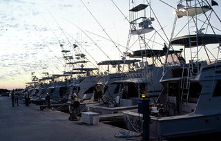 Charter boats docked at Oceanside Marina: Stock Island, Florida