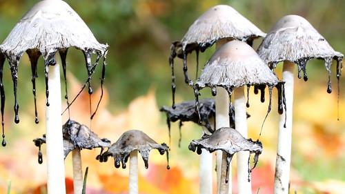 Black rain for little gnomes