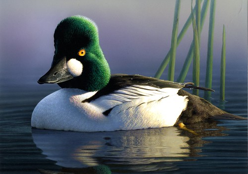 2012 Duck Stamp Winner