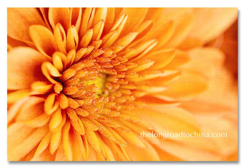 Yellowish Orange MUM BLOG