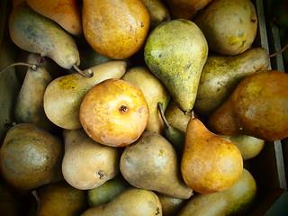 Pears 1563