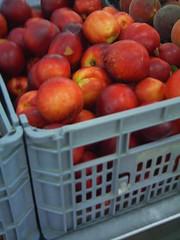 Cagette de nectarines