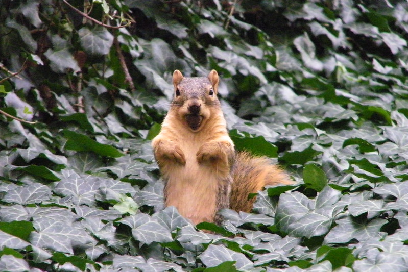 Squirrel at the University of Michigan, Monday October 1, 2012