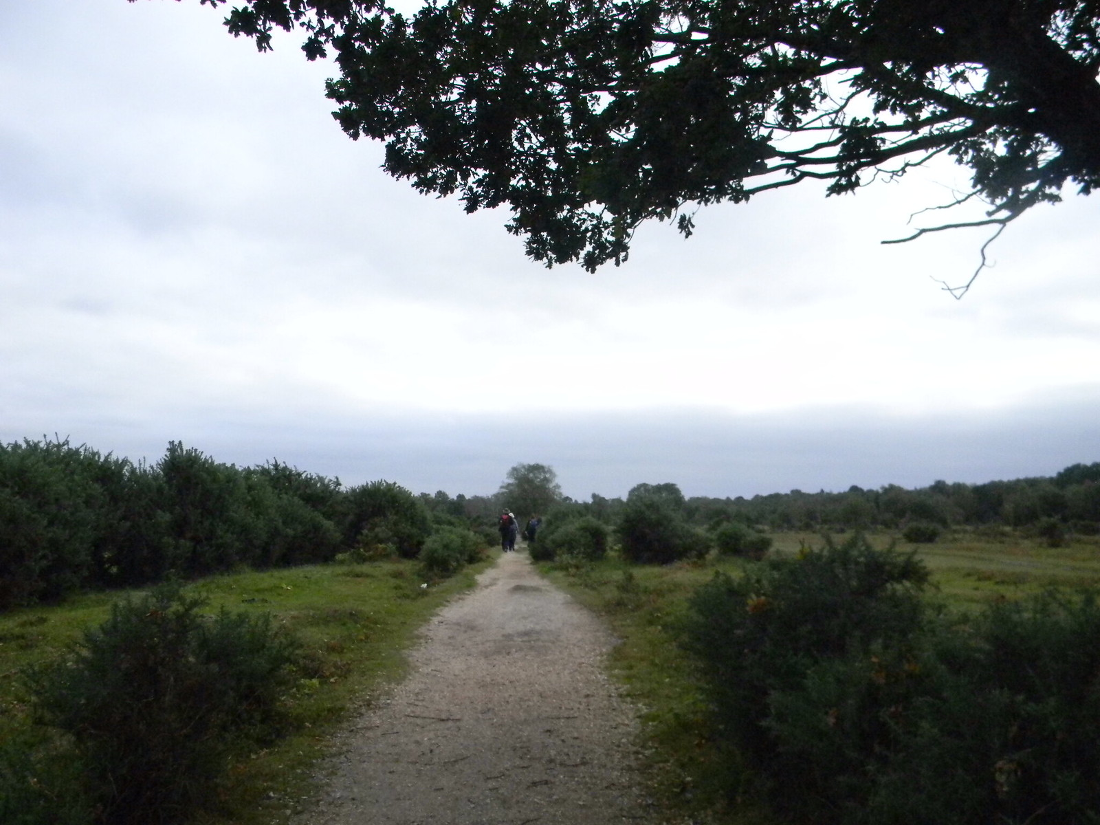 Path across Black Knowl Brockenhurst Circular