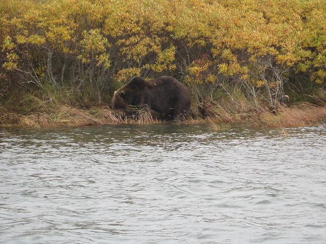 peters trip bear