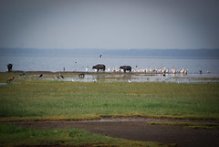 2012 Kenya (264 of 170)
