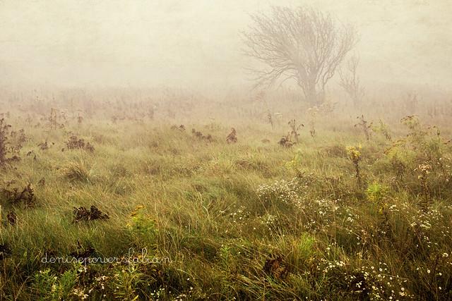 Falling Fog