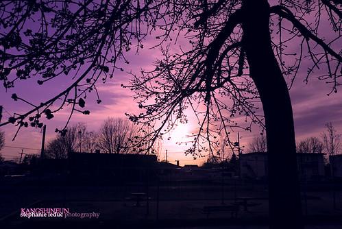sunset tree childhood
