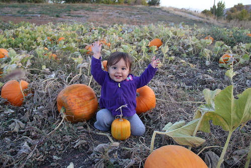 Jovie baby girl in the pumpkins 9