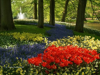 Dutch Tulips, Keukenhof Gardens, Holland - 0686