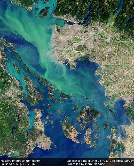 Earth from Space: Phytoplankton Bloom, Salish Sea