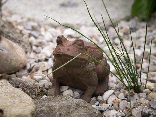 Und noch ein Frosch