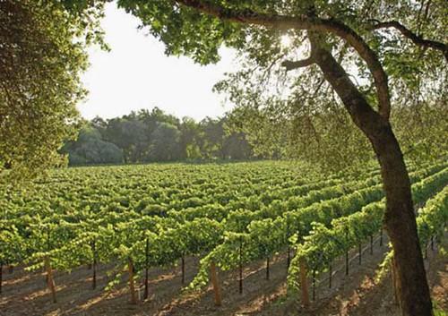 Enoturismo: viña