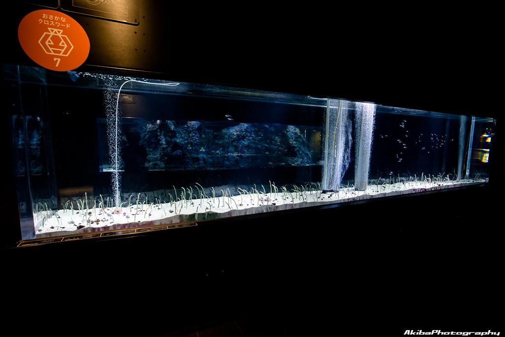 sumida-aquarium#21