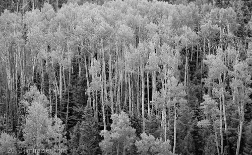 wood old railroad trees wild blackandwhite bw plants newmexico heritage history nature monochrome lines forest woodland landscape woods flora scenery natural pov scenic landmarks woody august trains symmetry historic steam transportation infrastructure historical symmetrical desaturated wilderness nm railways perpendicular centered railroads 2012 magicforest woodlot cumbres toltec headon verticallines nationalregisterofhistoricplaces q4 cumbrestoltecscenicrailroad centralperspective towm nrhp denverriograndewesternrailroad sublette ©jimfraziercom jfpblog 20120803westernroadtrip 20120813cumbresandtoltec fastpictures