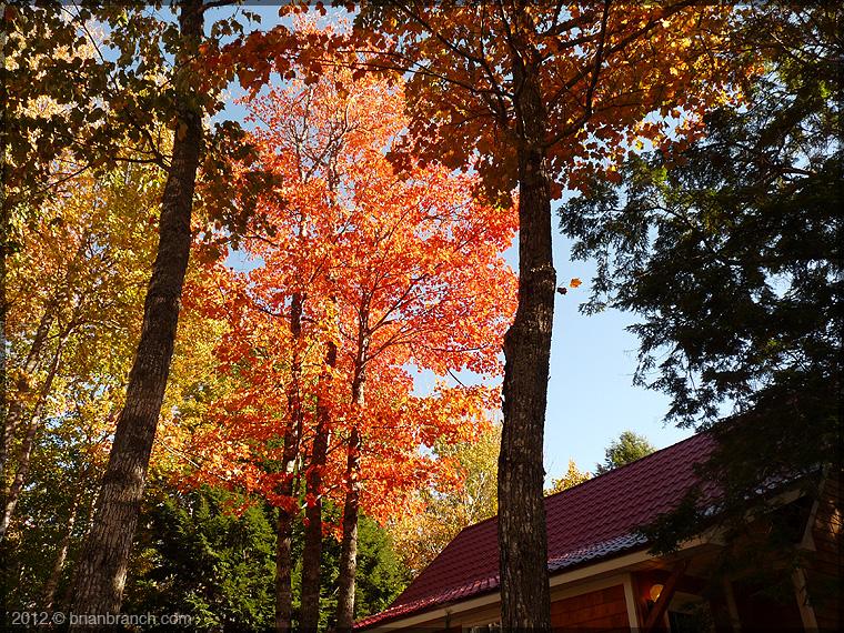 P1280854_fall_foliage