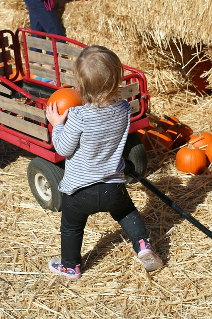 10-13-12 25 pumpkin patch