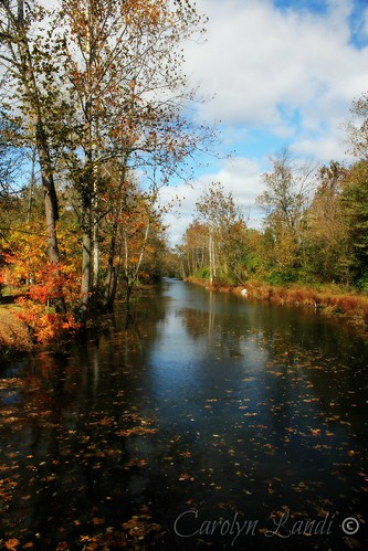 autumn trees sky fall nature water leaves clouds reflections river landscape canal leaf northampton colorful stream natural pennsylvania ngc scenic pa npc picturesque
