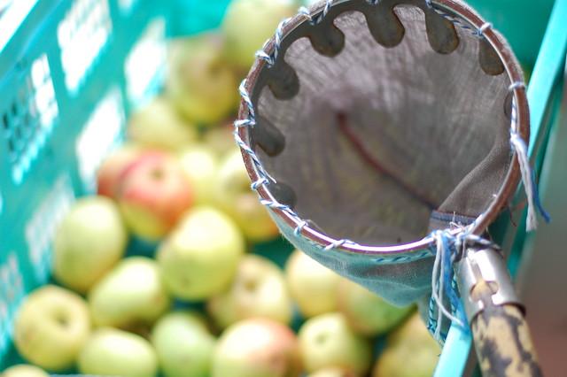apfelpflücker pflückt nicht
