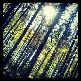 #maine #wildlife #park #tree #sun #fall