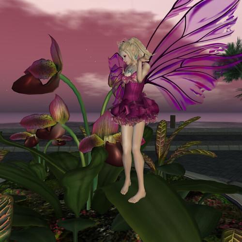 The Iris Faerie