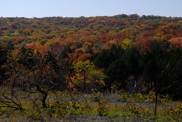 Shaw Nature Reserve (the Arboretum), in Gray Summit, Missouri, USA - view of autumn forest