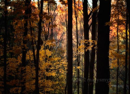autumn trees light nature colours