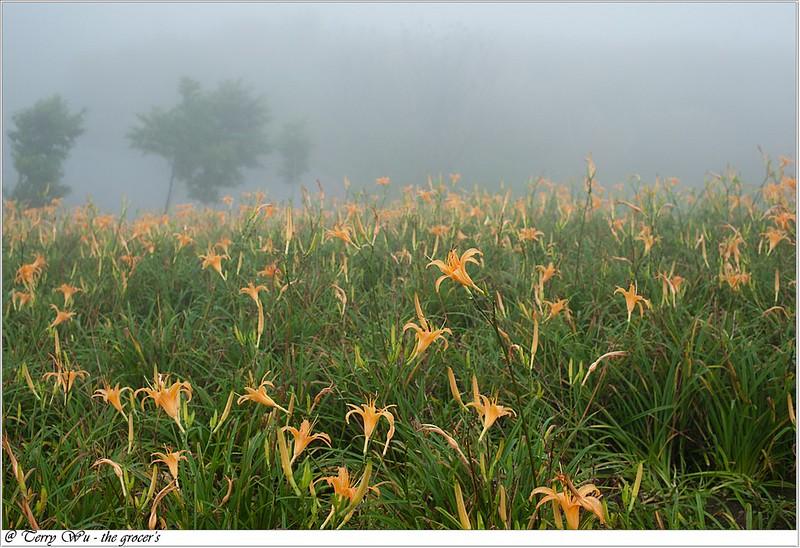 雲霧中的六十石山-14