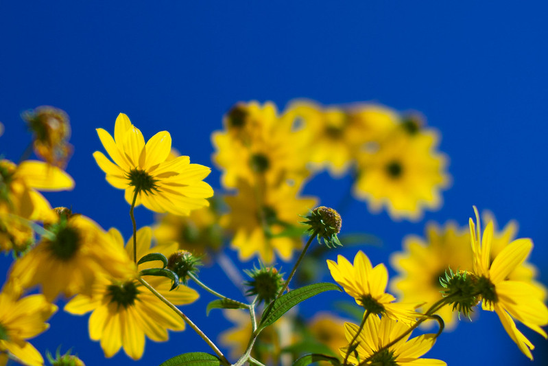 IMAGE: http://farm9.staticflickr.com/8043/8117591122_287ee294ea_c.jpg